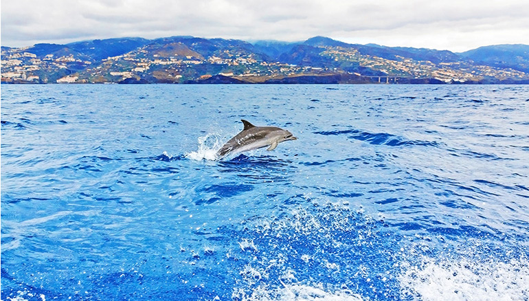 DOLPHIN AND WHALE WATCHING, MADEIRA ISLAND